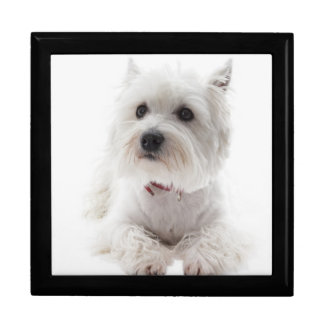 Adorable White West Highland Terrier Gift Box