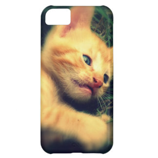 Adorable Yellow Striped Kitten iPhone 5C Covers