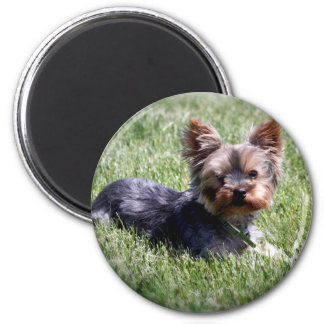 Adorable Yorkie Magnet