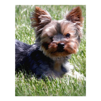 Adorable Yorkie Multiple Products Selected Personalized Letterhead