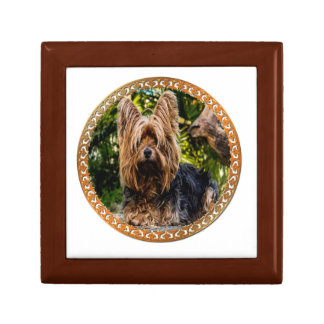 Adorable Yorkshire brown and black terrier Gift Box