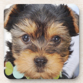 Adorable Yorkshire Terrier Coaster