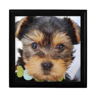 Adorable Yorkshire Terrier Gift Box