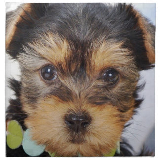 Adorable Yorkshire Terrier Napkin