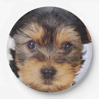 Adorable Yorkshire Terrier Paper Plate