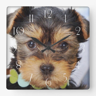 Adorable Yorkshire Terrier Square Wall Clock