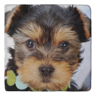 Adorable Yorkshire Terrier Trivet