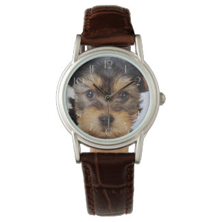 Adorable Yorkshire Terrier Watch