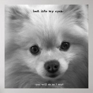 Adorably Cute Pomeranian Puppy poster print