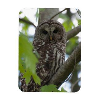 Adult Barred Owl Rectangular Photo Magnet