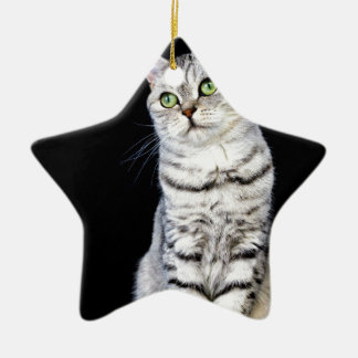 Adult british short hair cat on black background ceramic star ornament