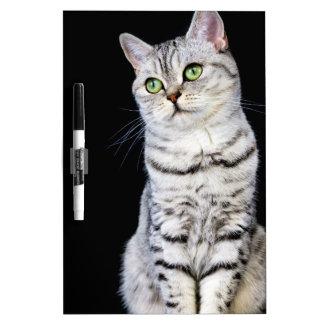 Adult british short hair cat on black background dry erase board