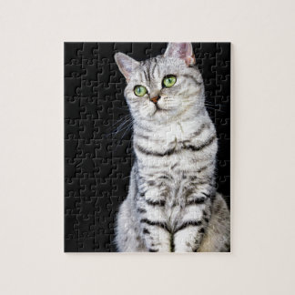Adult british short hair cat on black background jigsaw puzzle