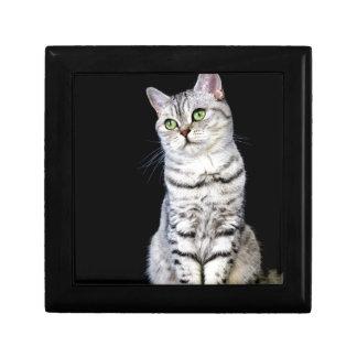 Adult british short hair cat on black background keepsake boxes