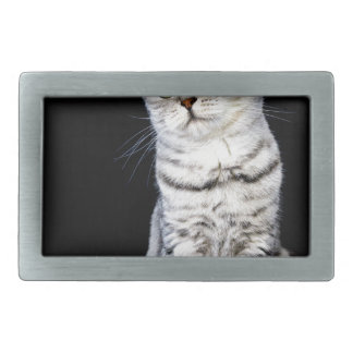 Adult british short hair cat on black background rectangular belt buckles