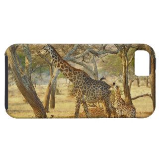 Adult female and juvenile Giraffe, Giraffa Case For The iPhone 5
