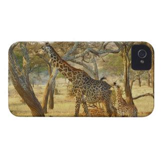 Adult female and juvenile Giraffe, Giraffa iPhone 4 Case-Mate Case