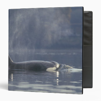 Adult female Orca Whale Orcinus Orca), Puget 3 Ring Binders