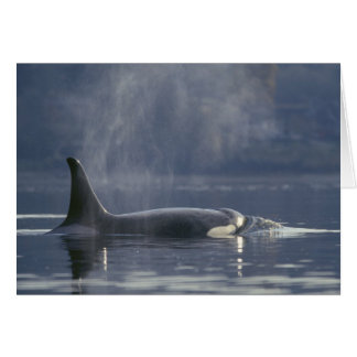 Adult female Orca Whale Orcinus Orca), Puget Greeting Card