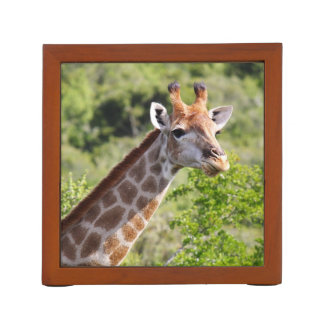 Adult Giraffe Face and Neck Desk Organizer