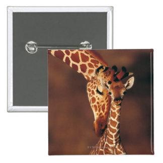 Adult Giraffe with calf (Giraffa camelopardalis) 2 Inch Square Button
