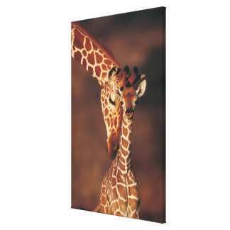 Adult Giraffe with calf (Giraffa camelopardalis) Canvas Print