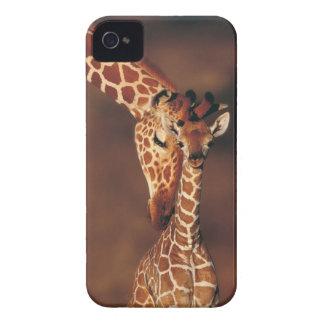 Adult Giraffe with calf Giraffa camelopardalis iPhone 4 Case-Mate Case