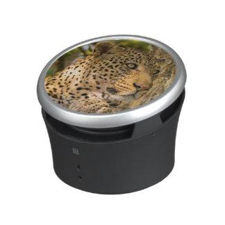 Adult Leopard (Panthera Pardus) Rests Bluetooth Speaker