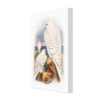 Adult Light Greenland Falcon Birds Great Britain Canvas Print