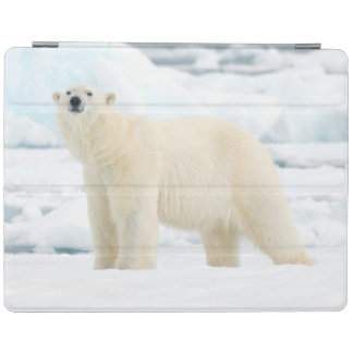 Adult polar bear in search of food iPad cover