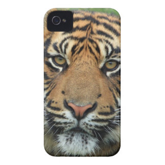 Adult Tiger iPhone 4 Case