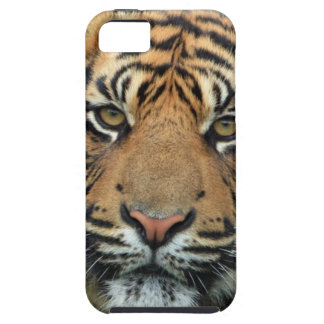 Adult Tiger iPhone 5 Cover