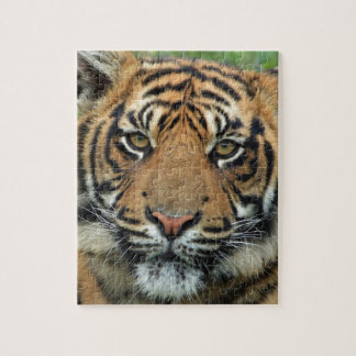 Adult Tiger Jigsaw Puzzle