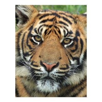 Adult Tiger Letterhead