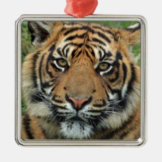 Adult Tiger Metal Ornament