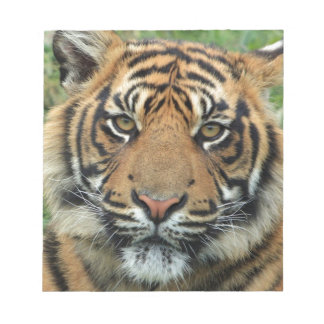 Adult Tiger Notepad