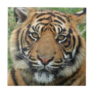 Adult Tiger Tile