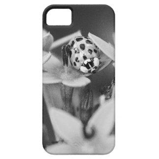 Adventurous Lady iPhone 5 Cover