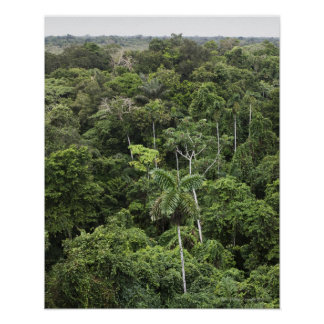 Aerial view of Amazon Rain forest Poster