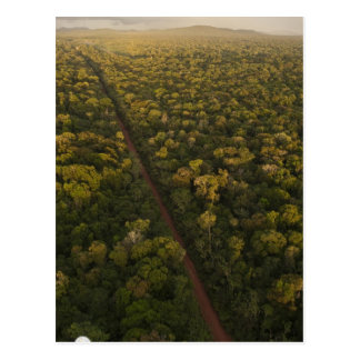 Aerial View of rainforest. Iwokrama Reserve, 2 Postcard