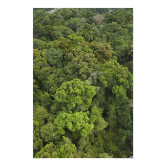 Aerial View of rainforest. Iwokrama Reserve, Photo Art