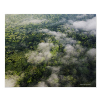 Aerial View of Rainforest, Panama Poster