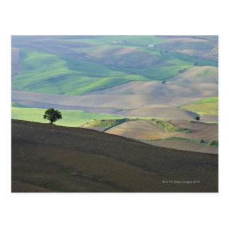 Aerial View of Rural Landscape near Ronda, Postcard