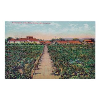 Aerial View of the Vineyards and Wine Cellars Poster