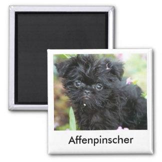 Affenpinscher Puppy Magnet