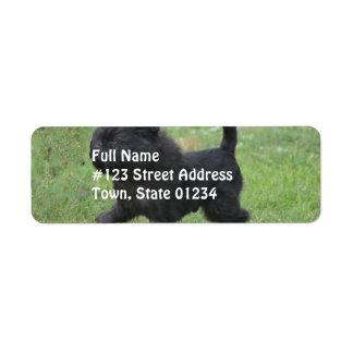 Affenpinscher Return Address Label