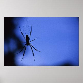 Affiche d araignée