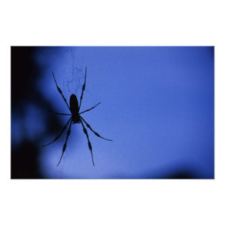 Affiche d'araignée