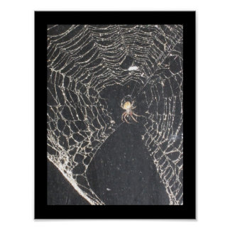 Affiche d'araignée de Chambre