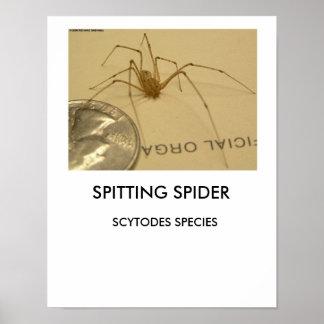 Affiche d'araignée de crachement